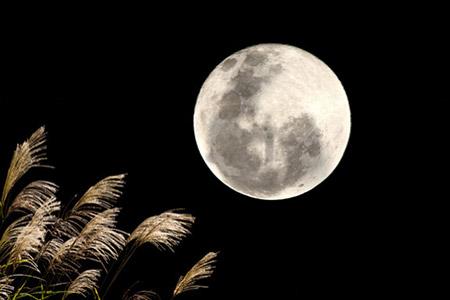 うさぎの餅つき 月